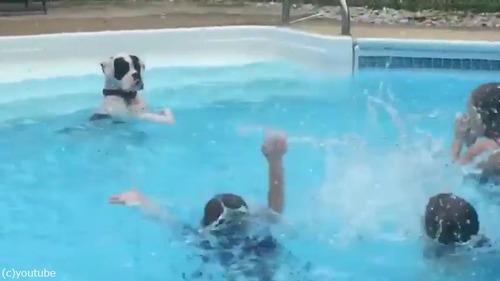 子どもたちから水遊びを教わるワンちゃん03