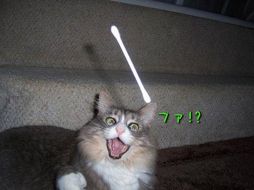 猫の綿棒キャッチ00