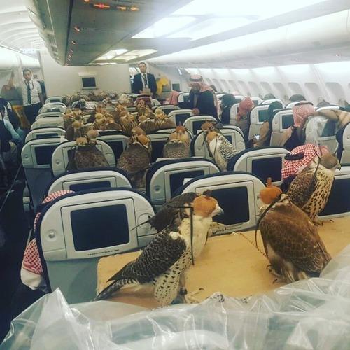 80羽のタカのために飛行機80席を購入01