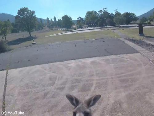 これぞオーストラリア…パラグライダー着地時にあの動物がお出迎え00