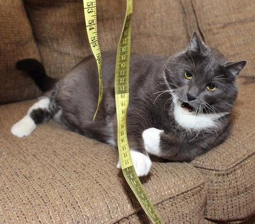 ダイエット猫03