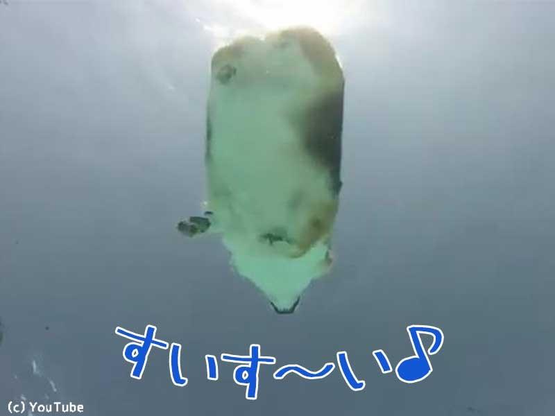 ハムスター 泳ぐ
