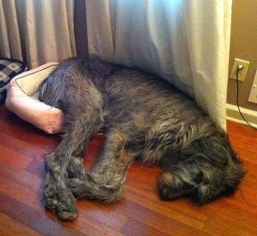 大きな犬のトラブル01