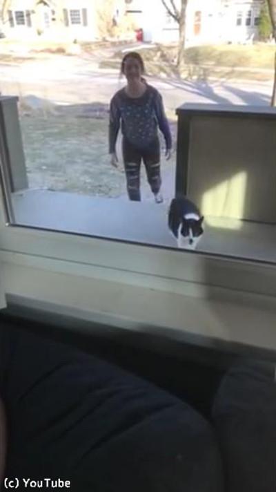 猫が帰宅に失敗01