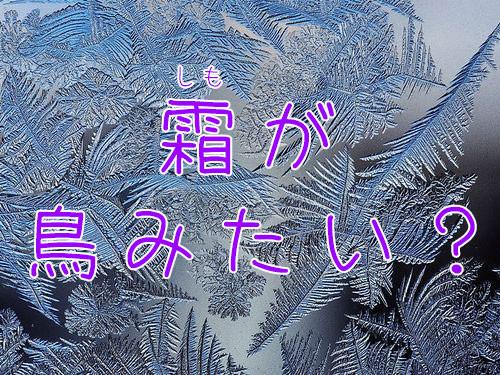 霜がまるで鳥のように見える00