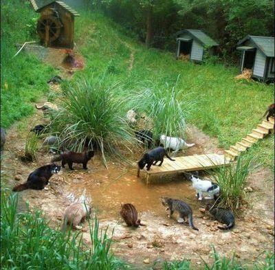 猫の王国11