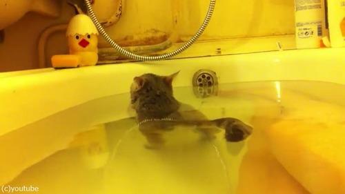 こんなにお風呂大好きな猫見たことない件03