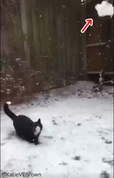 雪をキャッチするにゃんこ01