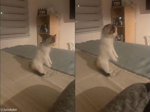 2本の足で立つ子猫03