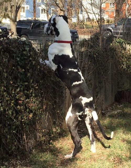 犬好きのお隣さん02