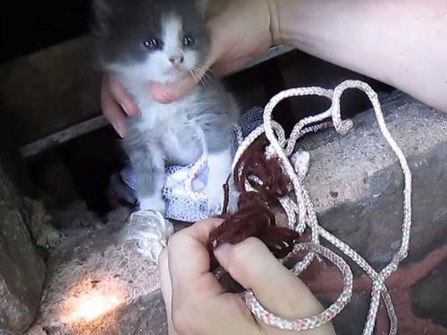 子猫救出&ママ猫と再会01
