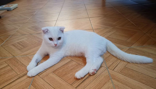 治療のウコンでピカチュウ化した猫01