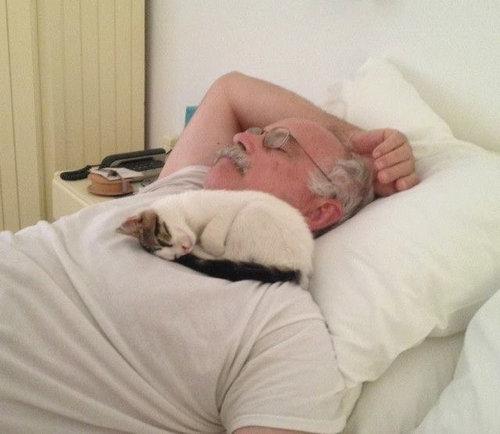 猫の住み着いたホテル08