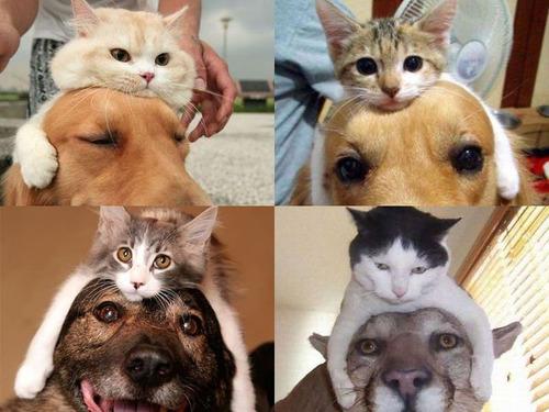 猫をかぶる犬たち00