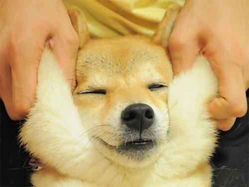犬のほっぺた09