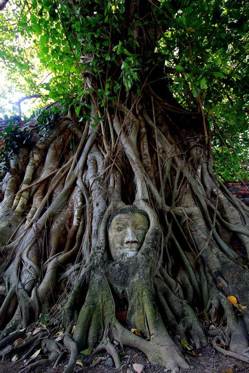 木の生命力06