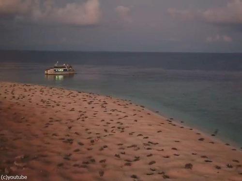6万匹のウミガメをドローンで撮影03