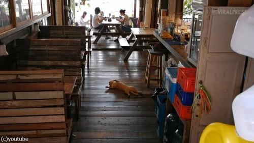 なんて無防備なんだ!お店で堂々と昼寝する猫01