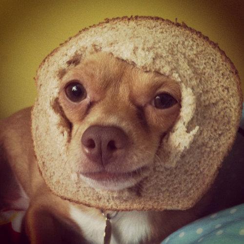 犬とパンの耳11