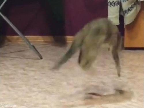 しっぽを追いかけて回転猫04
