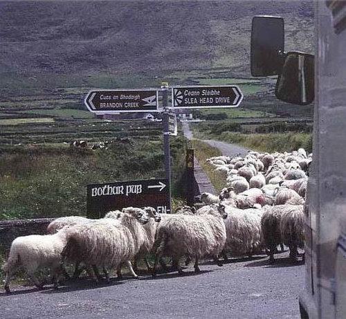 アイルランド「ディングル」05