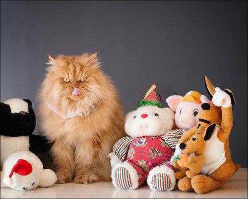 怒った猫07