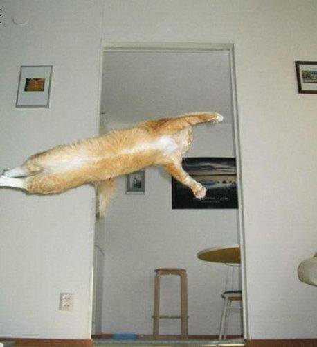 07跳ぶ・飛ぶ動物たち