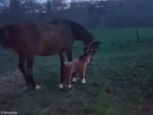 馬とぬいぐるみの馬02