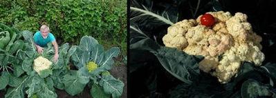 世界一大きな野菜や果物09