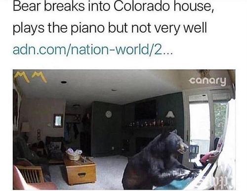 クマが家宅侵入、ピアノを弾きに来たらしい01