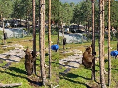 クマの木登り能力00