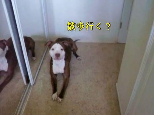 犬に「お風呂入る?」00