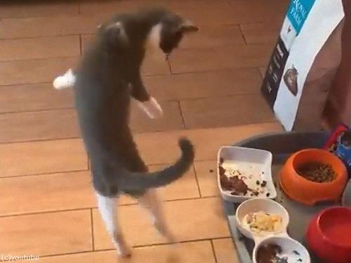 オムレツに興奮する子猫03