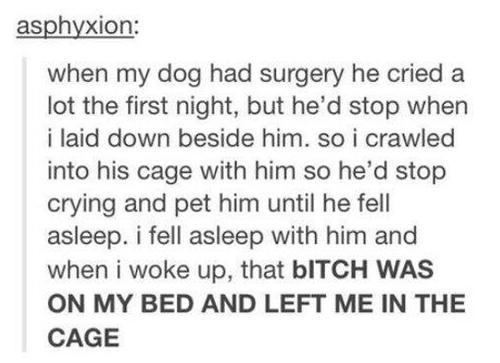 犬が手術を受けた日の晩あまりに鳴くので01