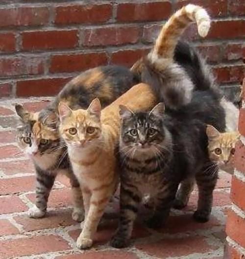 猫ギャング02