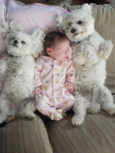 ペットと赤ちゃん13