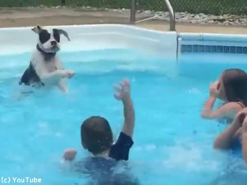 子どもたちから水遊びを教わるワンちゃん00