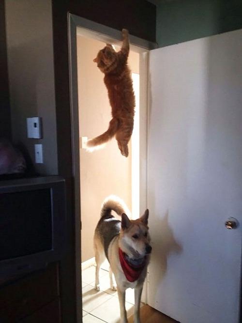 重力を無視する猫11