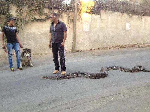 ヘビの散歩01