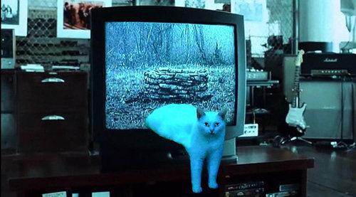 溶けてる猫05