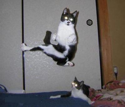猫が飛ぶ、犬も飛ぶ、人も飛んで飛びまくりな画像12