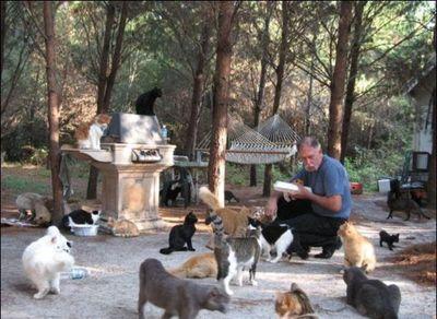 猫の王国04