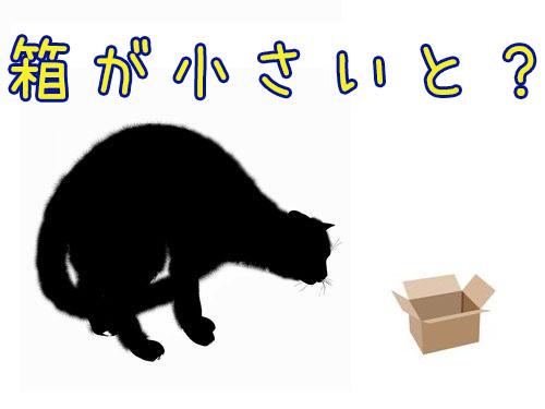 猫「フィットしないけど座ってみる」00