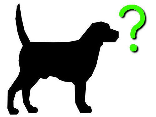 犬の興味深さ3段階00