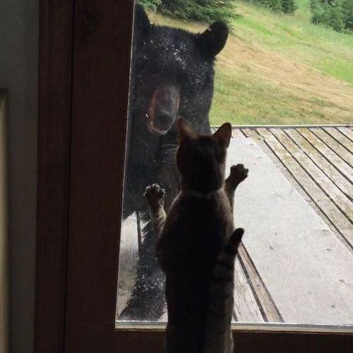 クマを追い払う猫03