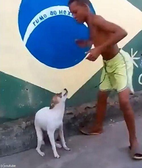 ブラジルは犬だってカーニバル05