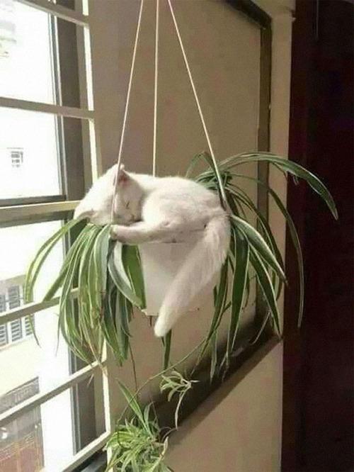 猫はどこでも寝る13