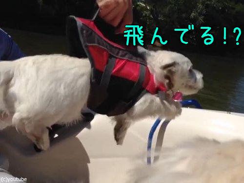 空を飛んでるつもりの犬00