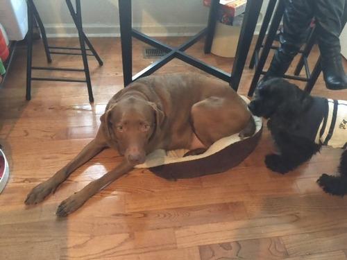 犬のベッドが小さい07