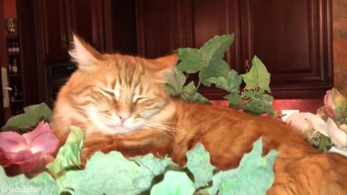 猫…なぜそこで昼寝?03